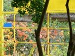 garden_framed