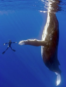 humpback-whale-and-man