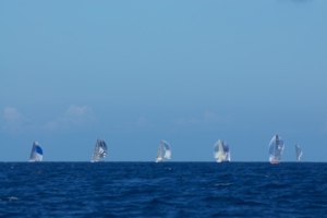 spinnakers on the horizon
